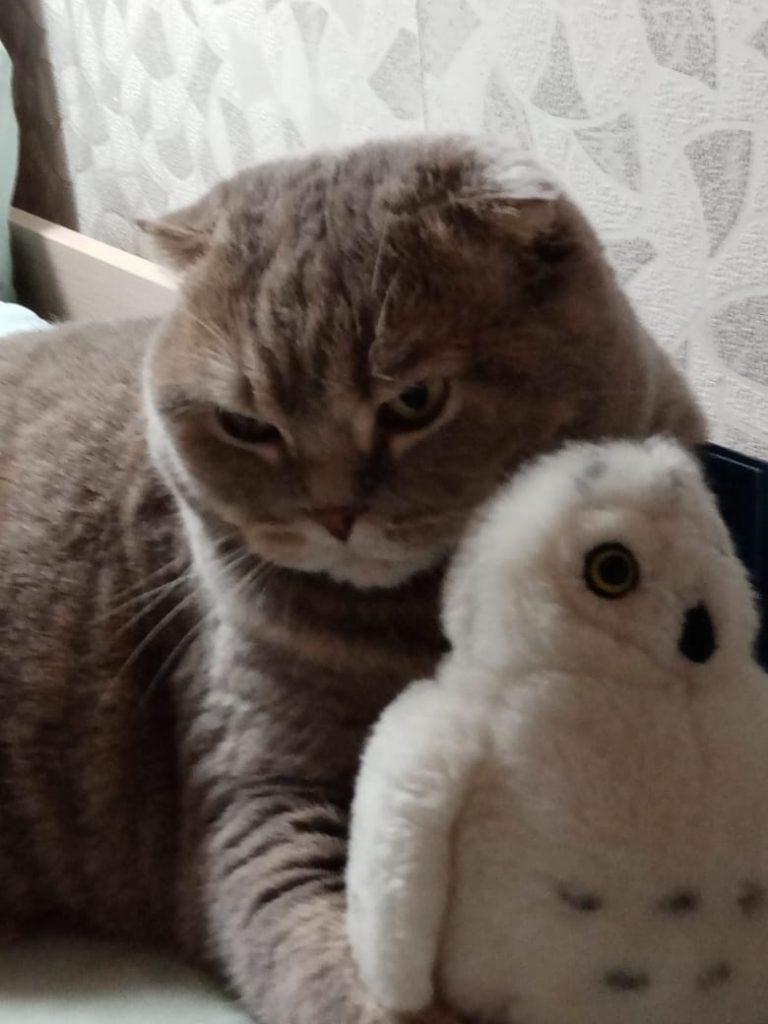 Мой кот Цапыч