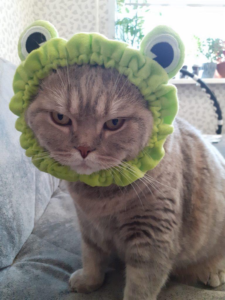 Царапка - котик лягушонок